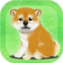 养育柴犬的治愈游戏破解版下载