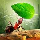 小蚂蚁部落破解版