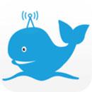 蓝鲸fm下载